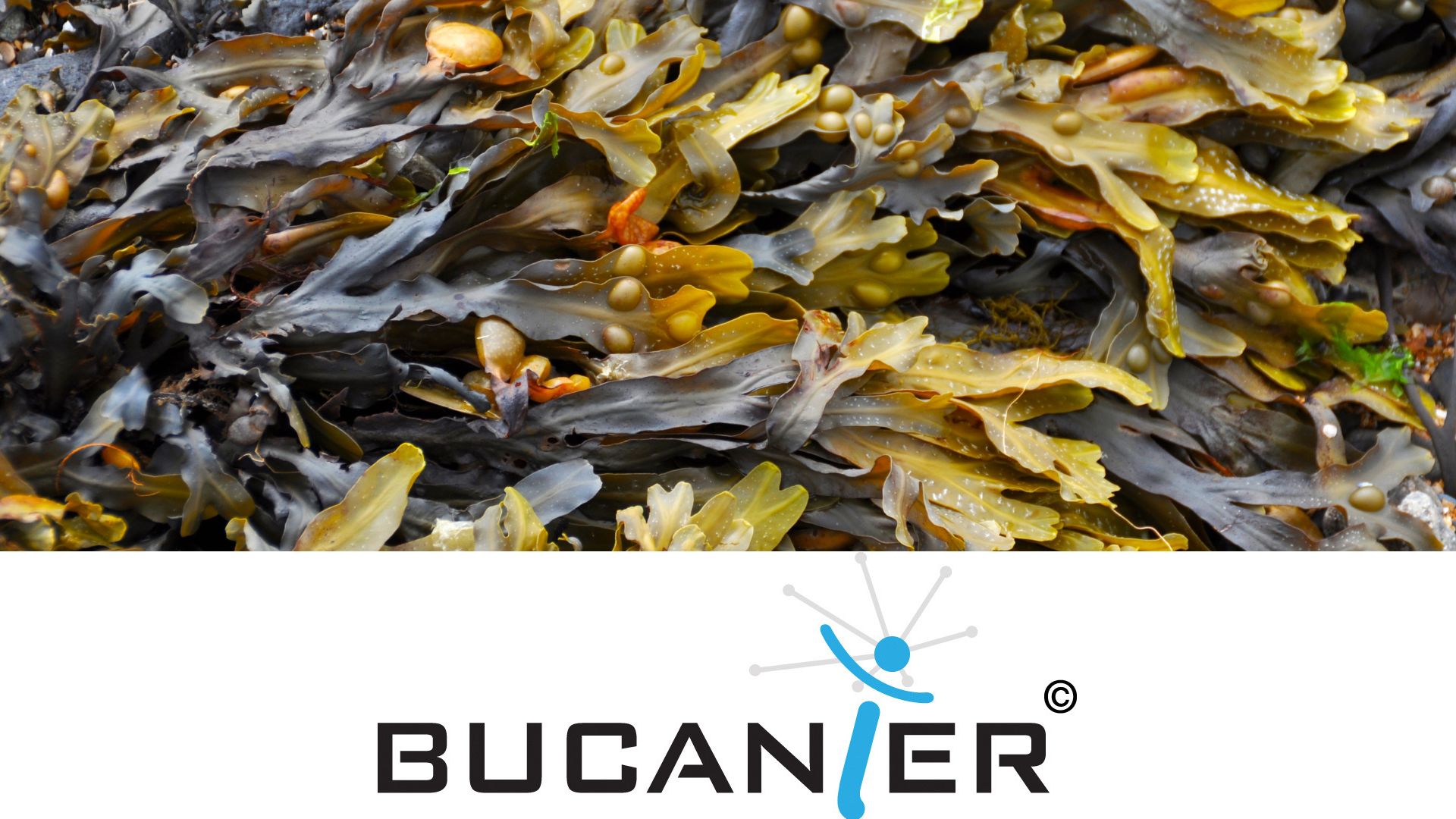 Seaweed Business Event