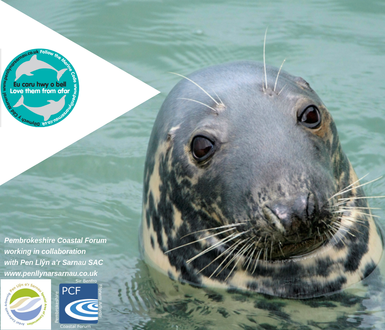 Pen Llyn Seal image