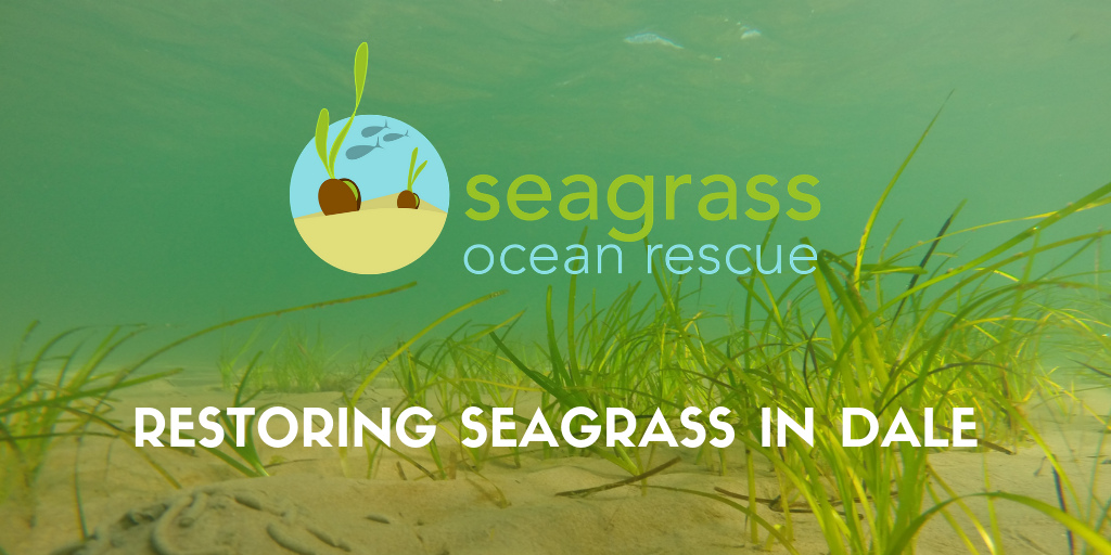 Restoring Seagrass in Dale