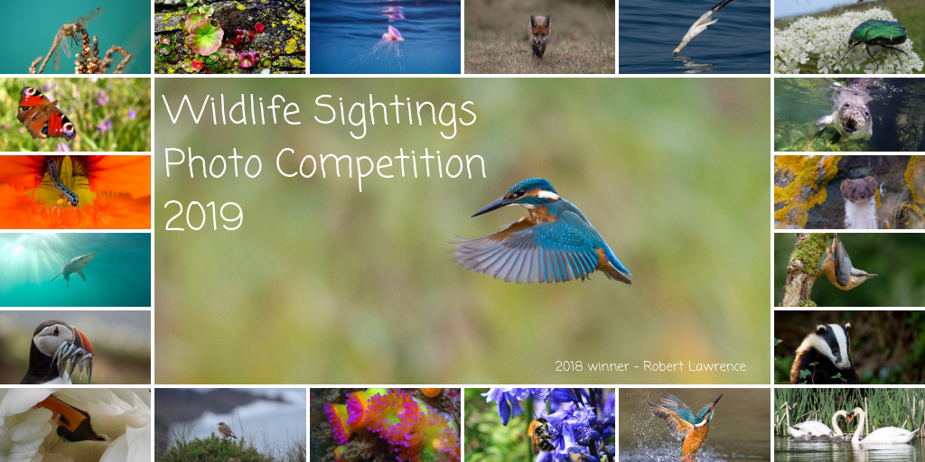 Wildlife Sightings Photo Competition 2019